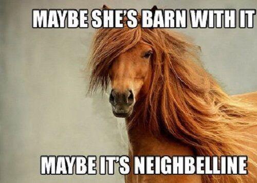 "Horse  refrigerator magnet 3 1/2 X 4  1/2 """
