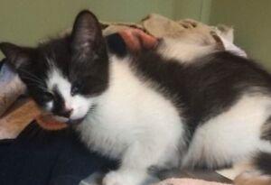 1 Dewormed Male kitten left