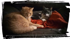 Two male cats need a home free to loving home