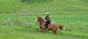 Horseback Riding Lessons and You Don't Even Leave Oshawa!