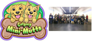 Calgary Mini-Mutts  indoor  Playgroup