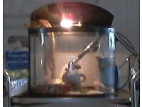 Aquarium: D shaped, 25 litre tropical fish tank: Power accessories and extras