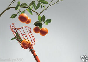 NEW-Fresh-Fruit-Picker-Basket-Orange-Peach-Plum-Apple