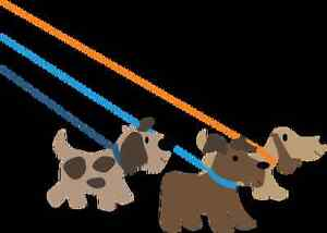 Would your dog love a walk? Dog walking service available.