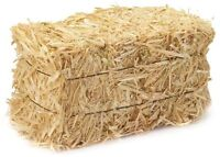 LOOKING TO PURCHASE/BORROW BALES OF STRAW