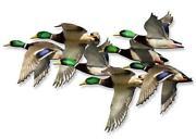 Duck Wall