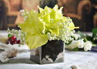 Unbranded Amaryllis Flowers & Floral Décor