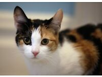 Cat sitter wanted in Berwick Upon Tweed over Xmas period - 17th-30th Dec, £7.50 per visit