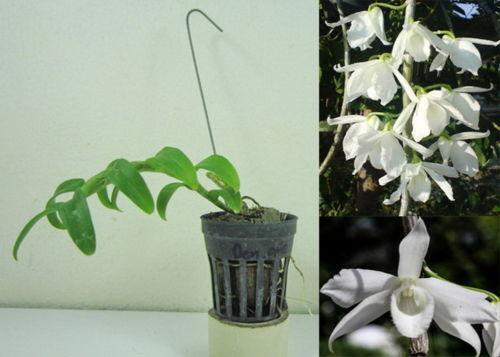 Orchid Plant Pot Ebay