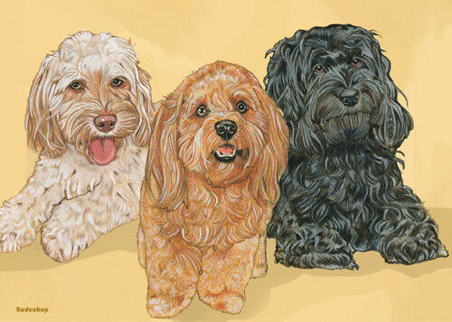 Cockapoo Blank Note Cards Boxed