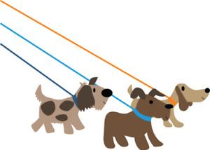 DOG WALKER IN AURORA/ NEWMARKET AREA