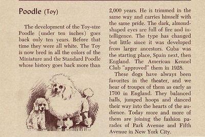 Toy Poodle Dog - Toy Poodle - Vintage Dog Art Print - 1954 M. Dennis