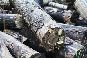 Wanted: fill wanted - dirt sand rocks logs wood chips