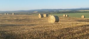 Fall Rye Greenfeed Round Hay Bales