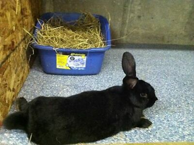 Maine Rabbit and Pet Rescue