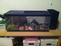 reptile tank with accesories