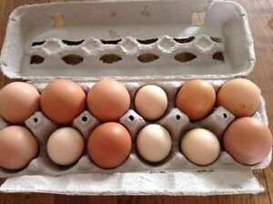 Mixed variety hatching eggs
