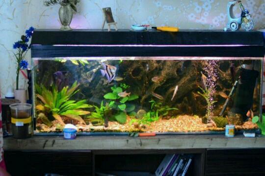 4 foot aquarium fish tank 3d aquarium background filter for Fish tank with filter and heater