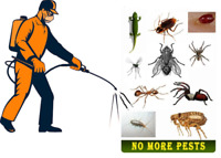 CHEAPEST PEST CONTROL SERVİCE; BEDBUGS, COCKROACHES , RATS&MiCE
