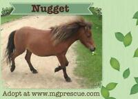 """Young Male Horse - Miniature Horse: """"Nugget"""""""