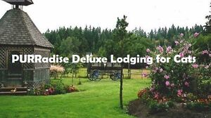 PURRadise Deluxe Lodging for Cats