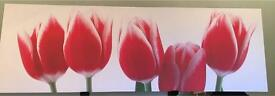 Tulip canvas