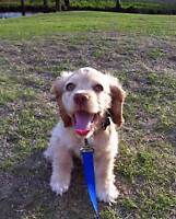 Friendly and reliable dog walker in Centertown