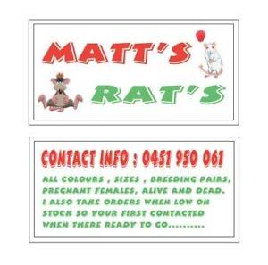 MATTS RATS WHERE BACK .... All rats $10-$15 .... Kingsgrove Canterbury Area Preview