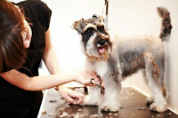 NOW HIRING: Dog groomers needed in beaconsfield