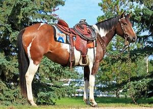 APRIL 23 WORKING RANCH HORSE COMPETITION AND SALE