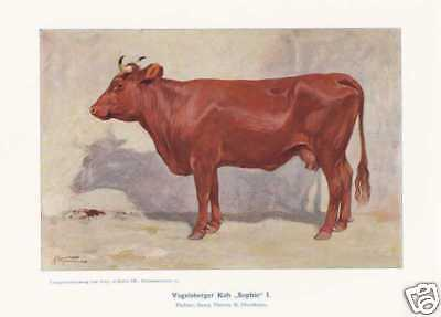 "Vogelsberger Kuh ""Sophie"" Kühe FARBDRUCK von 1925 Repri"
