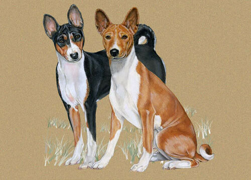 Basenji Blank Note Cards Boxed