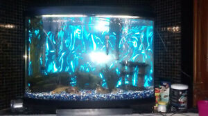 36 gallon bowfront stocked with fish London Ontario image 2