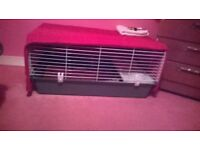 Indoor cage rabbit or guineapig