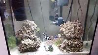 Aquarium Live Rock