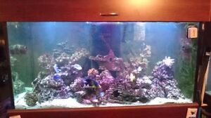 190 gal saltwater tank with lots of corals and fish. Kitchener / Waterloo Kitchener Area image 1