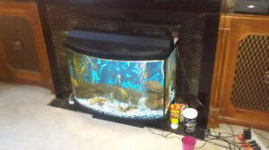 36 gallon bowfront stocked with fish London Ontario image 1