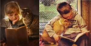 Cats to give away - 2 yrs old - fixed - very affectionate - free