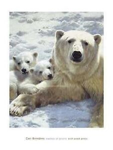 Polar BEARS Poster: Carl Brenders, Mother of Pearls, 24x32 inch