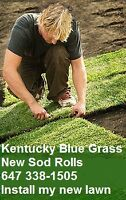 Rolled Sod Kentucky Blue Grass Lawn Installation and Maintenance