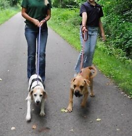 Pet Check in and Walking Service