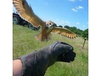 IntoTheBlue Experience Gifts & Memories -for example, Falconry Experience in Kent