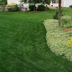 *Premium Sod Installation Mississauga* Bring Your Homes to Life!