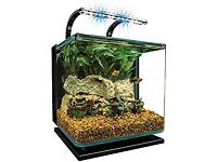 Atrium for small fish like gold fish . Can manage up to 4-5