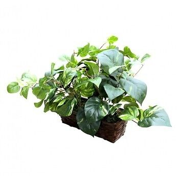 Spy-MAX Security  Fake Plant Hidden Camera w/ WiFi Remote View & 20 Hour Battery