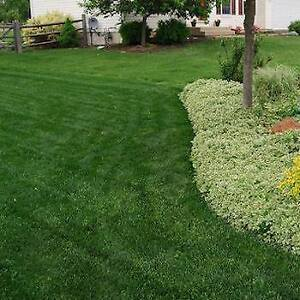 Bosco's Landscaping- ****Sod Specials*** FALL 2017 MAKEOVER