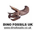 Dino Fossils UK
