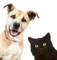 Friendly Pet Sitter / Cats, Small Dogs/Small Animals Welcomed