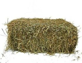 Hay for Sale - Norfolk - East Anglia £4.50 per bale