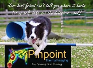 Canine Thermal Imaging (will be in Cape Breton)